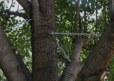 castor_tree_care3