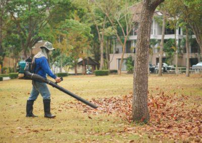 leaves clean 6